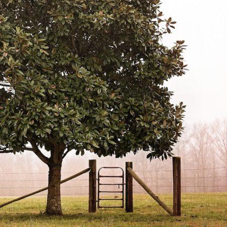 Safety Gates/Latches